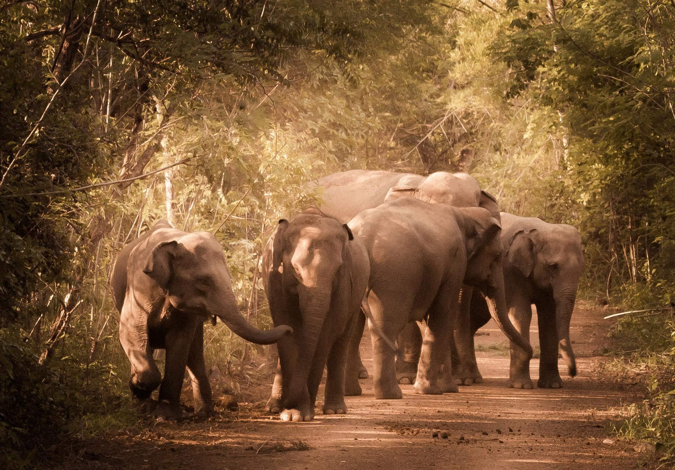 WED-image of Elephants